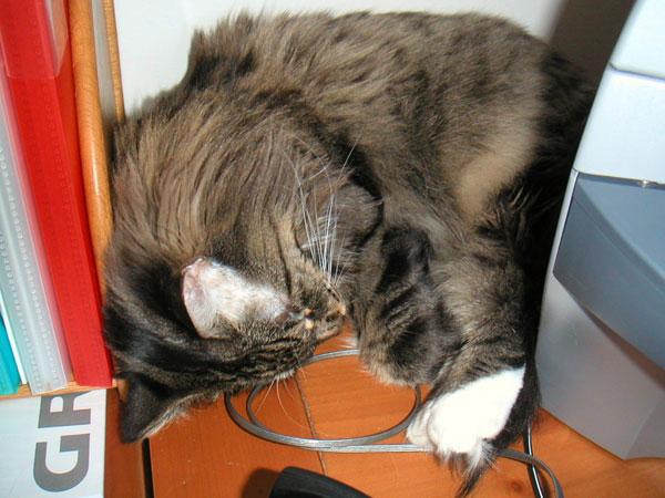 Sophie, sleeping