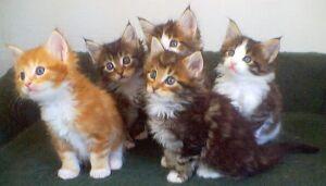 Molly and siblings