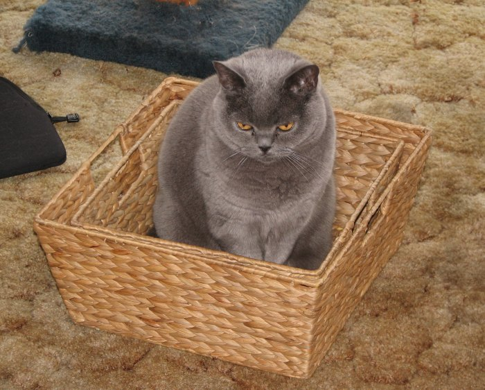 Megs-in-basket
