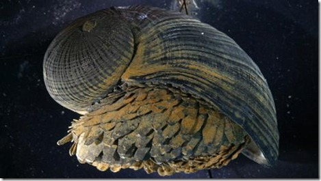iron_snail