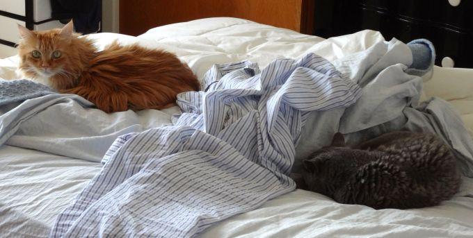 Kitties sharing bed