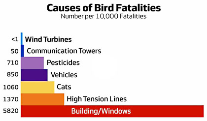 blog_bird_fatalities