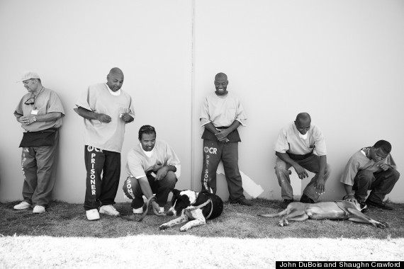 Prisoners with dogs 2