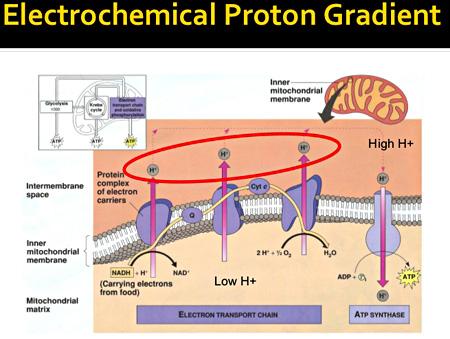 blog_proton_gradient